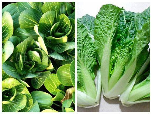 青菜一年四季都有,价格便宜