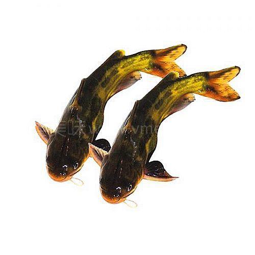 微山湖品鱼(原创散文)程守忠 - 橙子 - 有很多良友,胜于有很多财富。