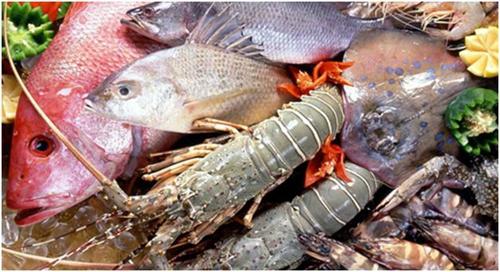 洋大厨的海鲜经(上)-【海鲜的挑选】