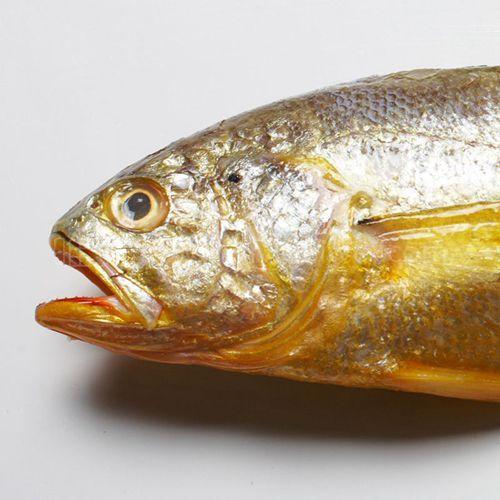 最好吃的是野生的可惜如今几乎没有了 -【黄鱼】